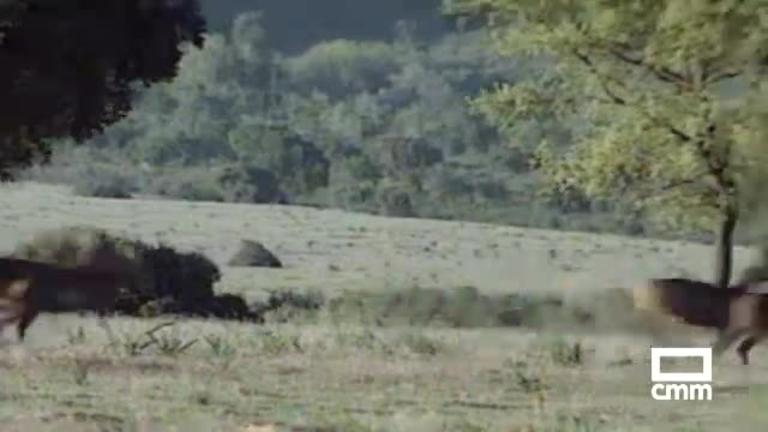 1988: Cabañeros sin bombas