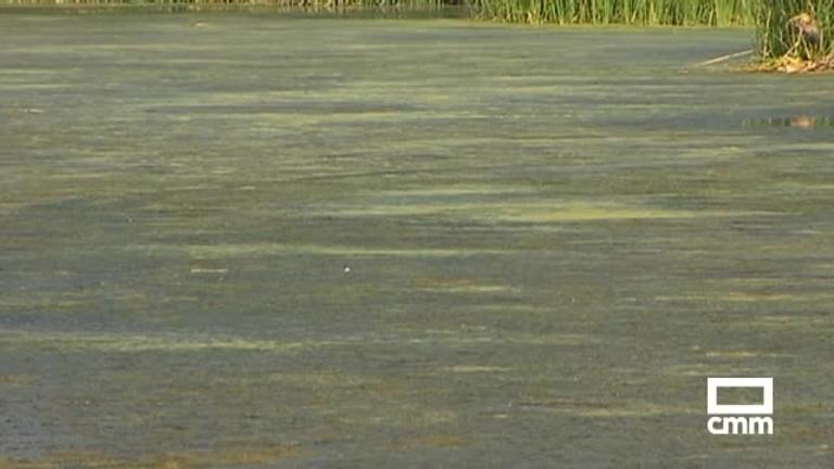 El calor y la sequía empeoran la plaga de mosquitos del río Tajo a su paso por Talavera