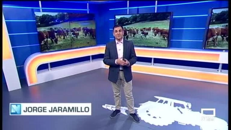 El Campo - España ha exportado ya 189.000 animales vivos