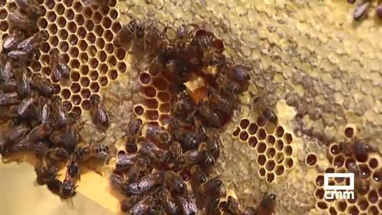 Apicultores de Albacete piden que la miel importada cumpla con sus estándares de calidad