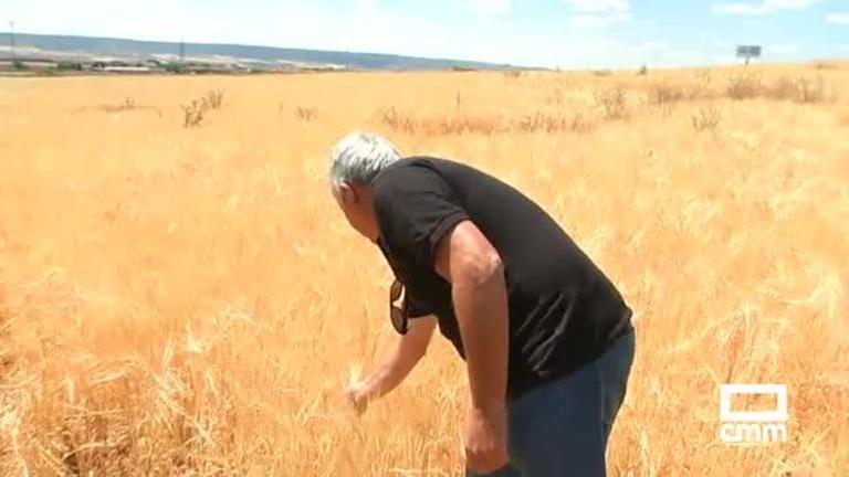 La falta de lluvias provoca problemas en la campaña del cereal, se espera una merma del 70%