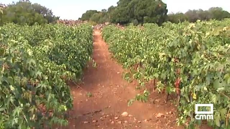 Las tormentas dificultan la recogida de la uva: así han quedado los viñedos