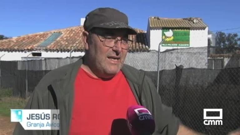 Una granja de Villapalacios (Albacete) denuncia la muerte de miles de gallinas por el ruido de aviones
