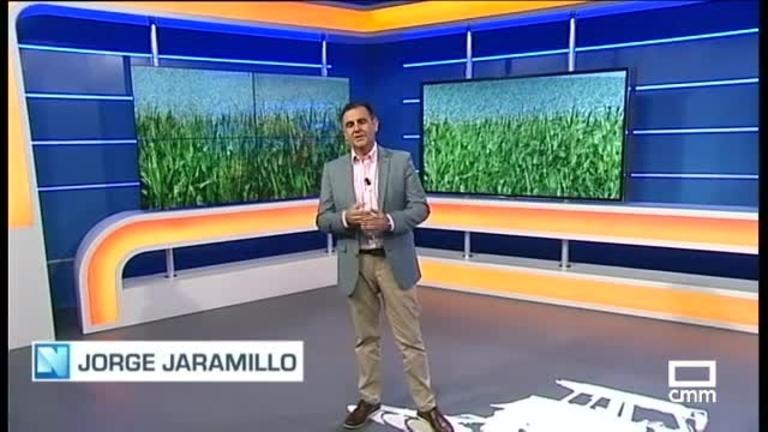 El Campo - El maíz, a punto de flor