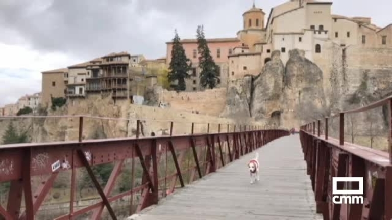 Pipper, el primer perro turista viajero de España, llega a Cuenca