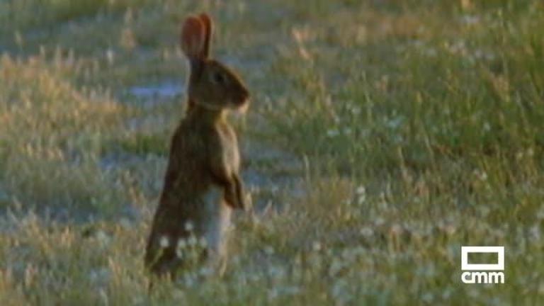 Adif deberá indemnizar a los agricultores de Tarancón por los daños ocasionados por los conejos