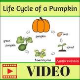 Life Cycle of a Pumpkin Video (with Audio)
