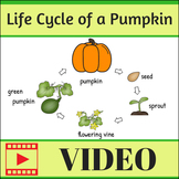 Life Cycle of a Pumpkin Video (without Audio)