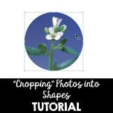Tips for Cropping Photos into Different Shapes