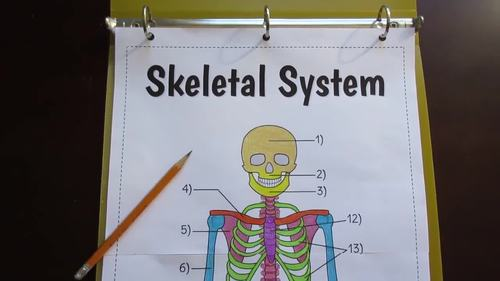 Skeletal System Foldable - Big Foldable for Interactive Notebooks or Binders