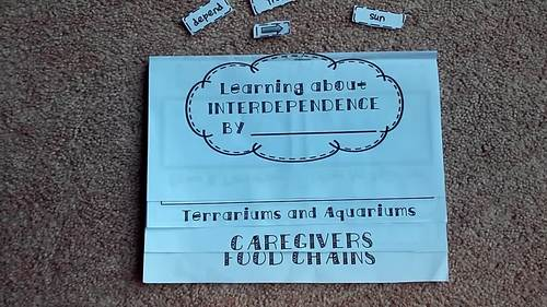 Interdependence: 4 Page Interactive Science Flip Book