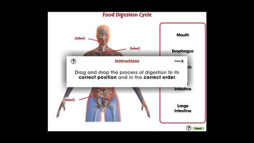 Circulatory,Digestive,Reproductive Systems: Food Digestion Cycle NOTEBOOK Gr.3-8