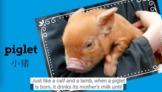 Farm Animals 2: Baby Farm Animals