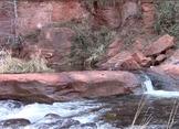 Yoga Brain Break at Oak Creek River in Sedona