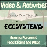 Ecosystems: Energy Flow Pyramids, Food Chains and Webs Vid
