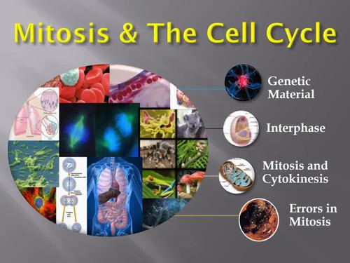 Mitosis and Cell Division Lesson - Biology PowerPoint & Student Notes Package