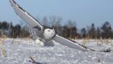 Bird Adaptation: Flight and Feathers