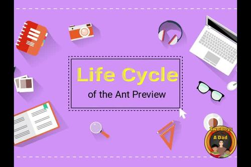 Life Cycle of the Ant Digital Interactive Notebook for Google Slides