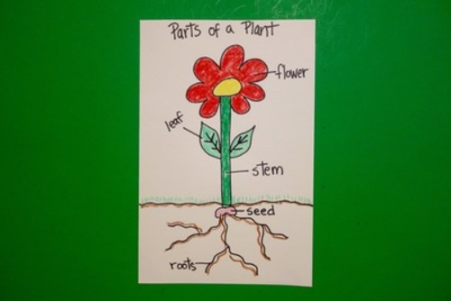 Let's Draw the Parts of a Plant! by Patty Fernandez Artist ...
