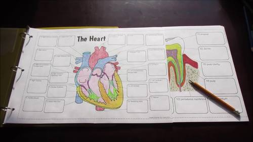 Big Anatomy Foldables Bundle for Interactive Notebooks or Binders