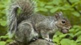 How do animals spread seeds?