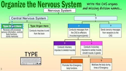 NERVOUS SYSTEM ~Digital Resource for Google Classroom~ ANATOMY