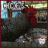 Chicken Lifecycle Videos and Chicken Reading Passages