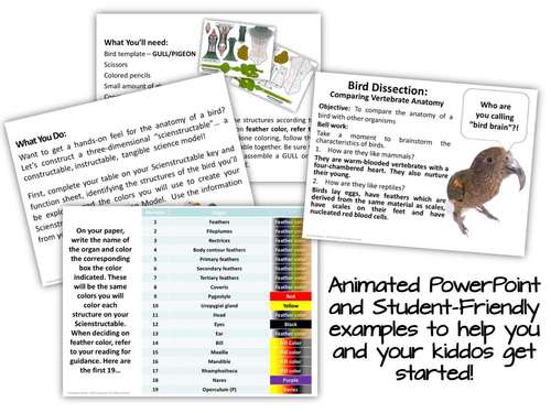 Bird Paper Dissection - Scienstructable 3D Dissection Model