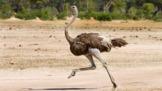 Bird Adaptation: Feet