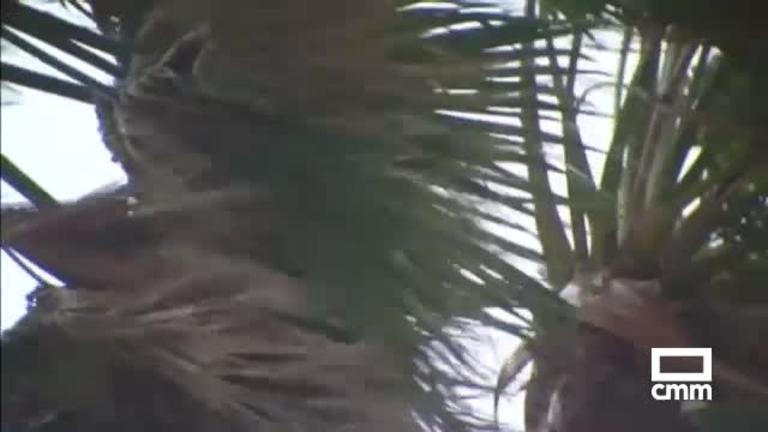 La fuerza del huracán Irma, rebajada al llegar al estado de Florida