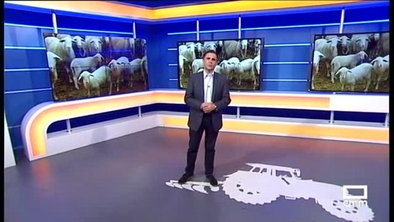 El Campo | Aumenta la exportación de cordero a Europa