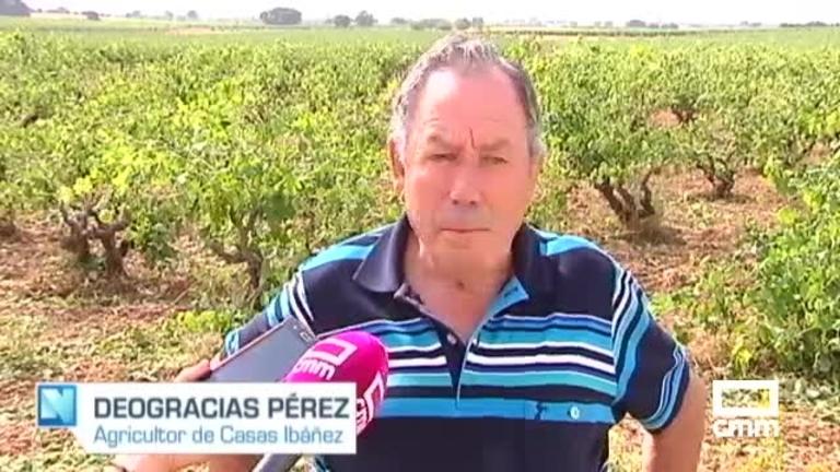 El granizo ha destrozado el cereal y ha dañado el 70% de viñas en Casas Ibáñez (Albacete)
