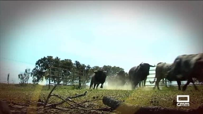 Especial Tiempo de Toros. Centenario de Joselito el Gallo, rey de los toreros