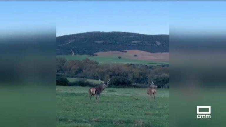 #MeGustaEnCasa - Emilio Zamora, Sierra de Piedrabuena y Segóbriga