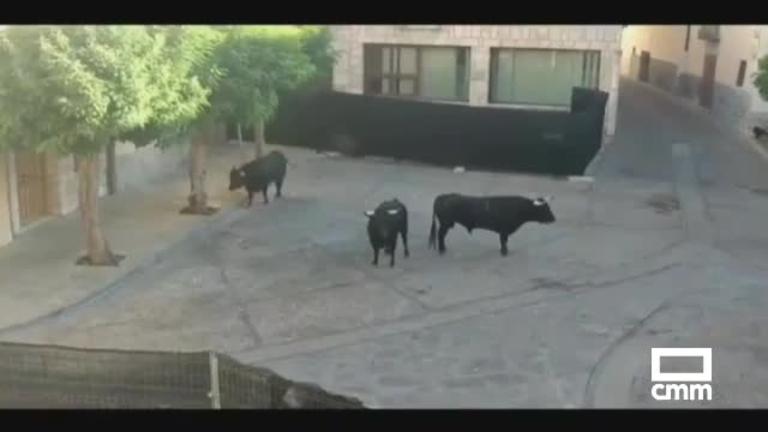 Varios heridos, algunos por asta de toro, en el encierro de Pastrana (Guadalajara)