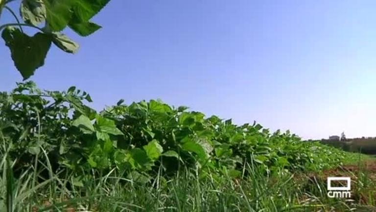 Natural Food: de la huerta a la mesa