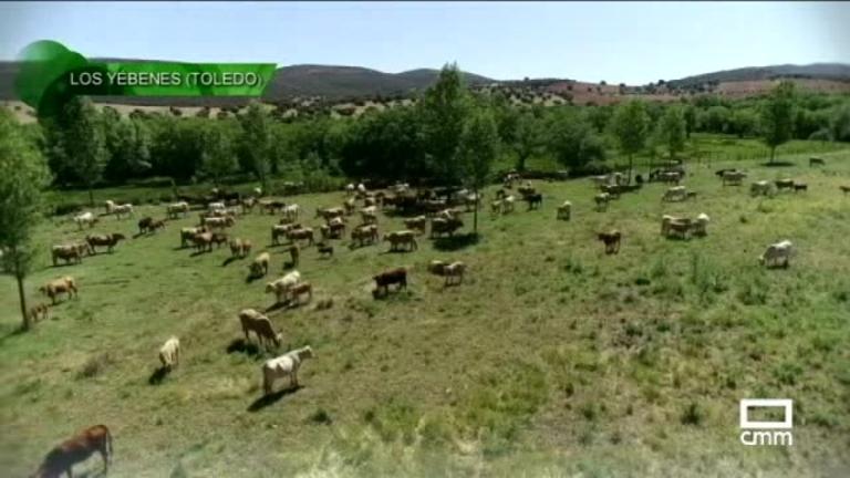 Uno de los últimos vaqueros de los Montes de Toledo