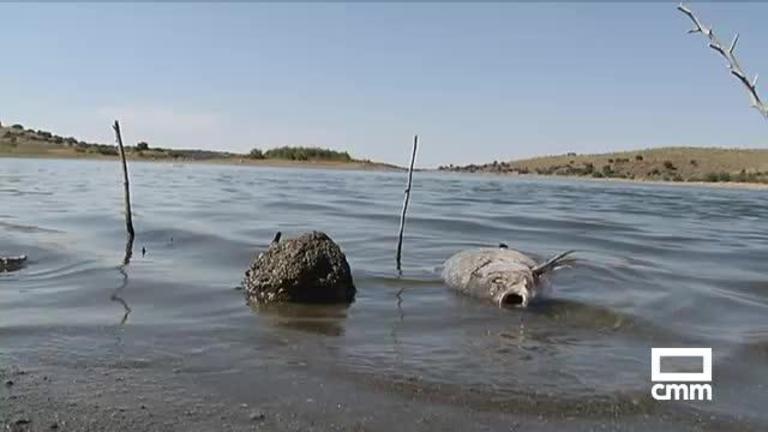 Preocupación por la aparición de decenas de carpas muertas en el embalse de Guajaraz (Toledo)
