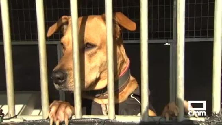 Ugena se queda sin protectora: los perros rescatados necesitan un nuevo hogar