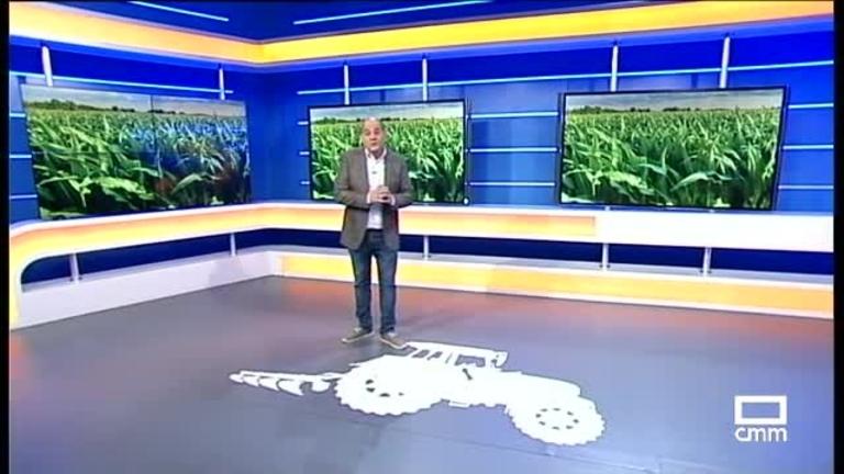 El Campo   Se prevé un repunte de producción nacional en la campaña de maíz
