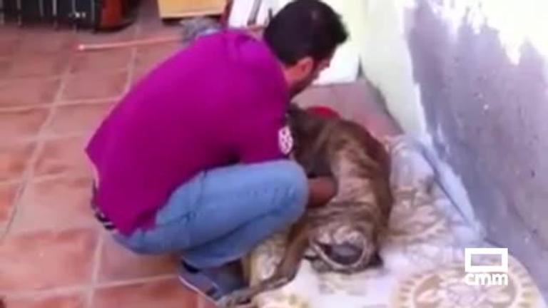 Los casos de robo de galgos triplican a los de abandono, según un documental de las federaciones de caza