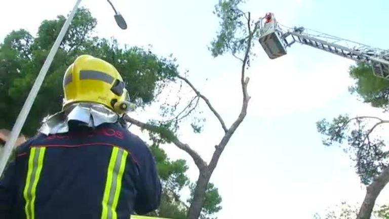Aviso amarillo por fuertes vientos: el temporal derriba árboles en varios puntos de CLM