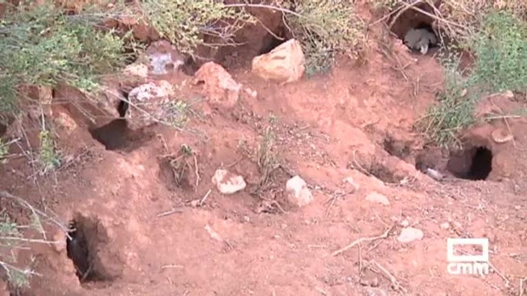 Una plaga de conejos ataca a las cepas de la DO Mondéjar
