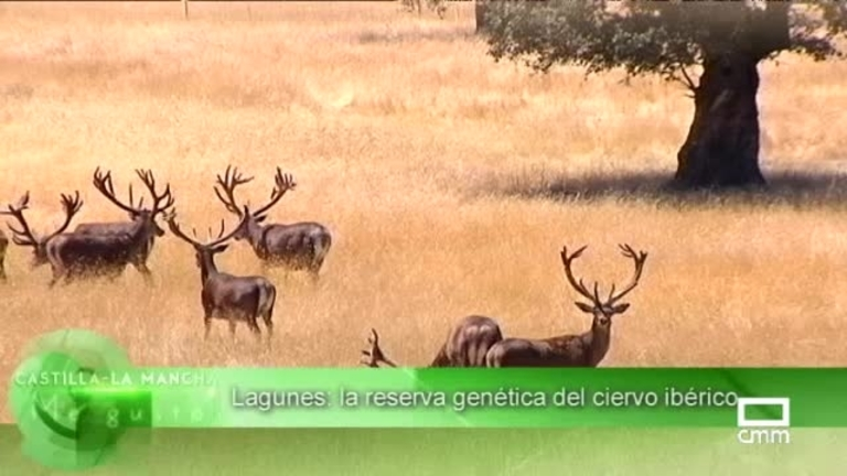 CLM me gusta - Campisábalos y Reserva genética del ciervo ibérico