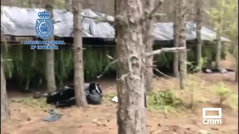 Vídeo: detenidos por cultivar dos toneladas de marihuana en la Serranía Cuenca
