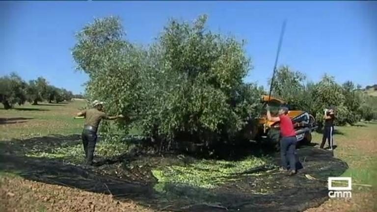 Las pioneras del aceite de oliva Virgen Extra