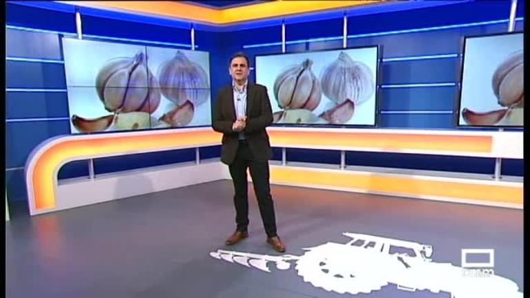 El Campo   Los productores de ajo miran a China y a Reino Unido