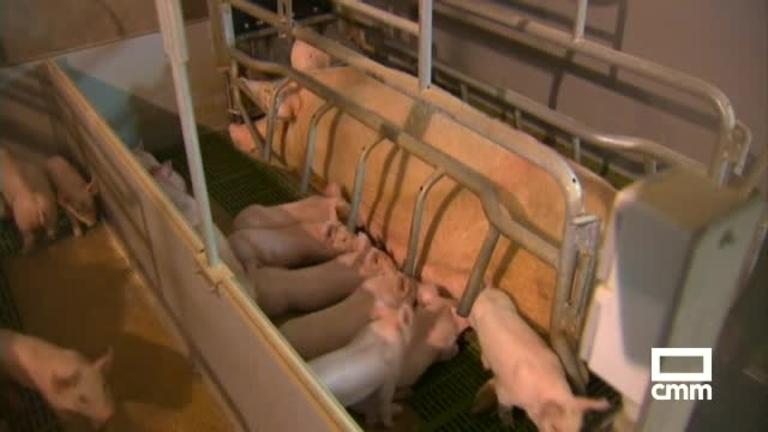 Priego se moviliza contra la instalación de otra macrogranja porcina