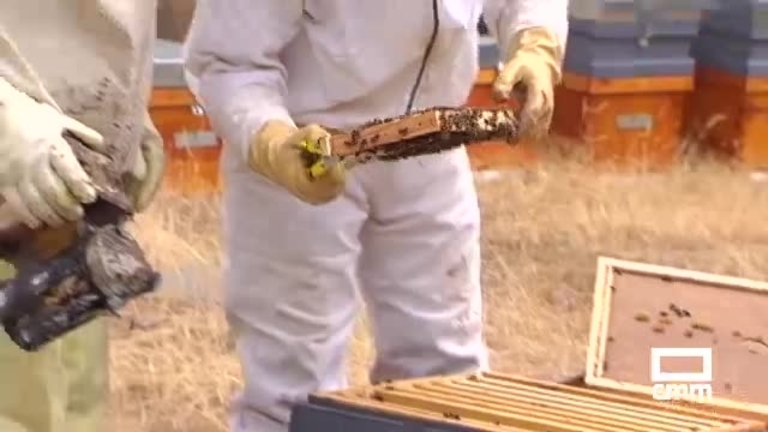 Apicultores y UPA de CLM: las importaciones de miel a bajo precio bloquean la venta del producto español