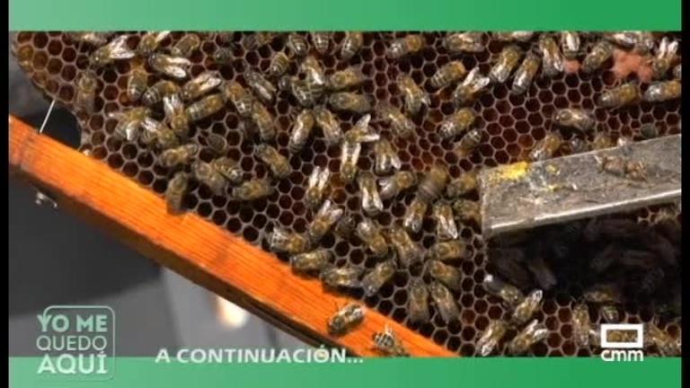 Yo Me Quedo Aquí: Solana del Pino y Hormigos